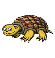 cartoon image of turtle vector image