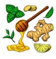 honey ginger lemon and mint drawing vector image