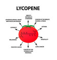 lycopene treats the disease tomato vector image vector image