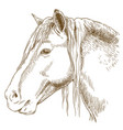 Engraving of horse head vector image