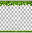 green branches and grass transparent background vector image