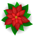 Poinsettia flower vector image vector image