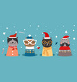 christmas cats in hole kitten in winter clothes vector image vector image