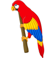 Cute parrot cartoon posing vector image vector image