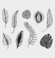 tropical or exotic leaves leaf of different vector image vector image