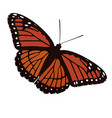 butterfly with orange colored wings vector image