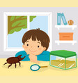 pet stag beetle vector image vector image