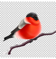 realistic bullfinch bird at branch xmas vector image vector image