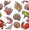 seamless pattern sea shell coral crab and shrimp vector image