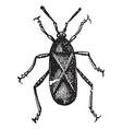 Squash Bug vintage engraving vector image vector image