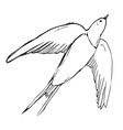 swallows and martins are a group of passerine vector image