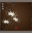 three white chrysanthemum flowers on dark vector image vector image