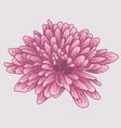 brignt violet colored chrysanthemum vector image vector image