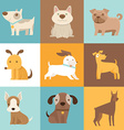 Funny and friendly dogs and puppies vector image
