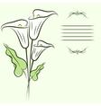 Callas background vector image vector image