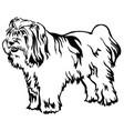 decorative standing portrait of tibetan terrier vector image vector image
