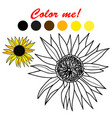 hand drawn sunflower coloring book page vector image vector image