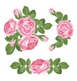 set collection of pink roses with leaves isolated vector image vector image