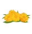 3d realistic marigold flower calendula isolated