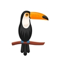 funny toucan sitting on branch exotic bird vector image