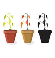 set dying home plants vector image vector image