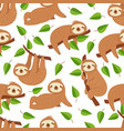 cute baby sloth bear tropical bedroom vector image
