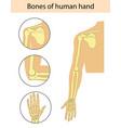 set of of human hand bones vector image vector image