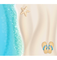 starfish background vector image vector image