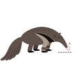 ant-eater cartoon animal icon vector image