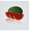 colorful melon eps10 vector image vector image