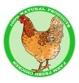 Brown broody chicken vector image vector image