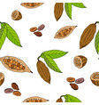 cocoa bean and leaf seamless pattern vector image