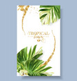 color banner alocasia tropic leaf vector image