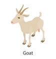 goat icon isometric style vector image vector image