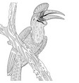 hornbill bird adult coloring page vector image vector image