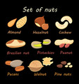 set collection various nuts vector image