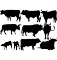 cattle vs vector image vector image