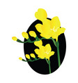 yellow freesia flowers black circle on white vector image vector image