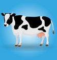 cow animal color black white vector image vector image