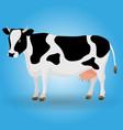 Cow animal color black white