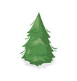 green pine tree isolated icon vector image vector image