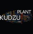 kudzu text background word cloud concept vector image vector image