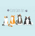 set cute cats vector image vector image