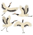 set japanese crane birds isolated on a white vector image vector image