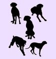 viszla dog silhouette 02 vector image vector image