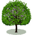 beautiful tree with leaves vector image vector image