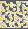 blooming daisies on a dark background vector image vector image