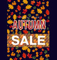 colorful poster with leaves for autumn sale vector image vector image