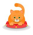 ginger cat lying on a soft red pouffe isolated vector image vector image