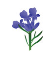 purple lavander flowers with green leafs on white vector image vector image